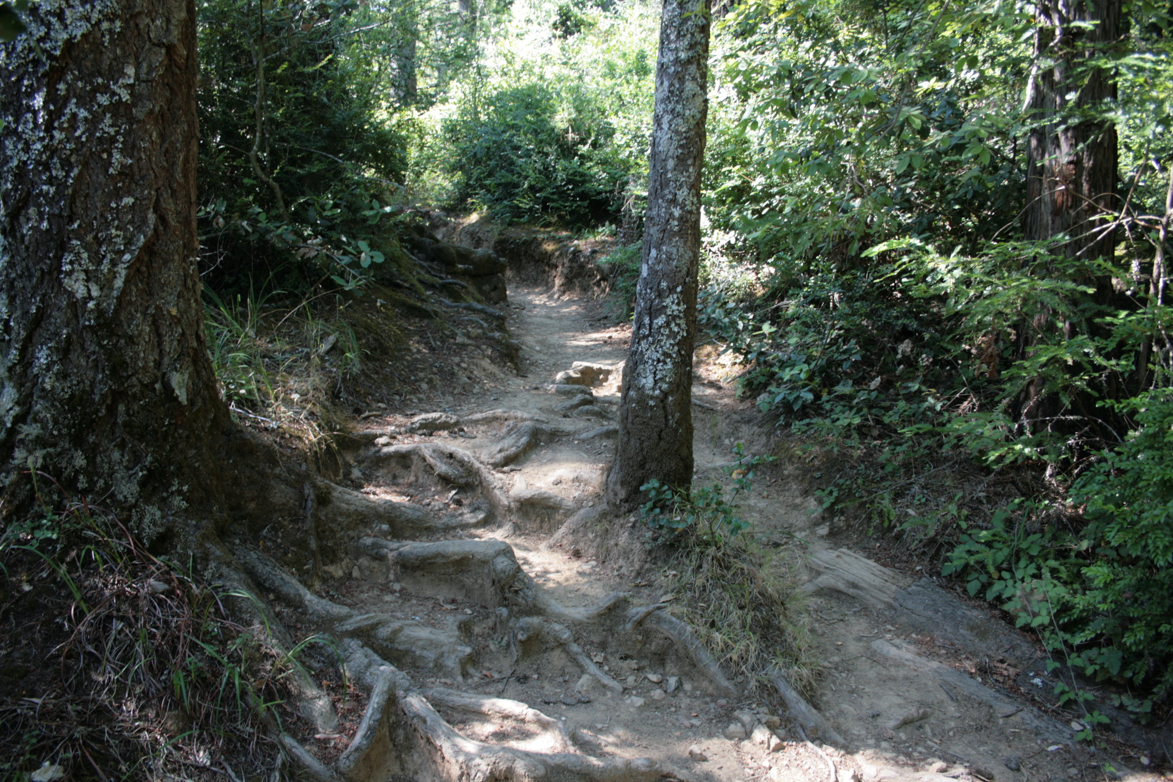 PHOTO: Dipsea Trail