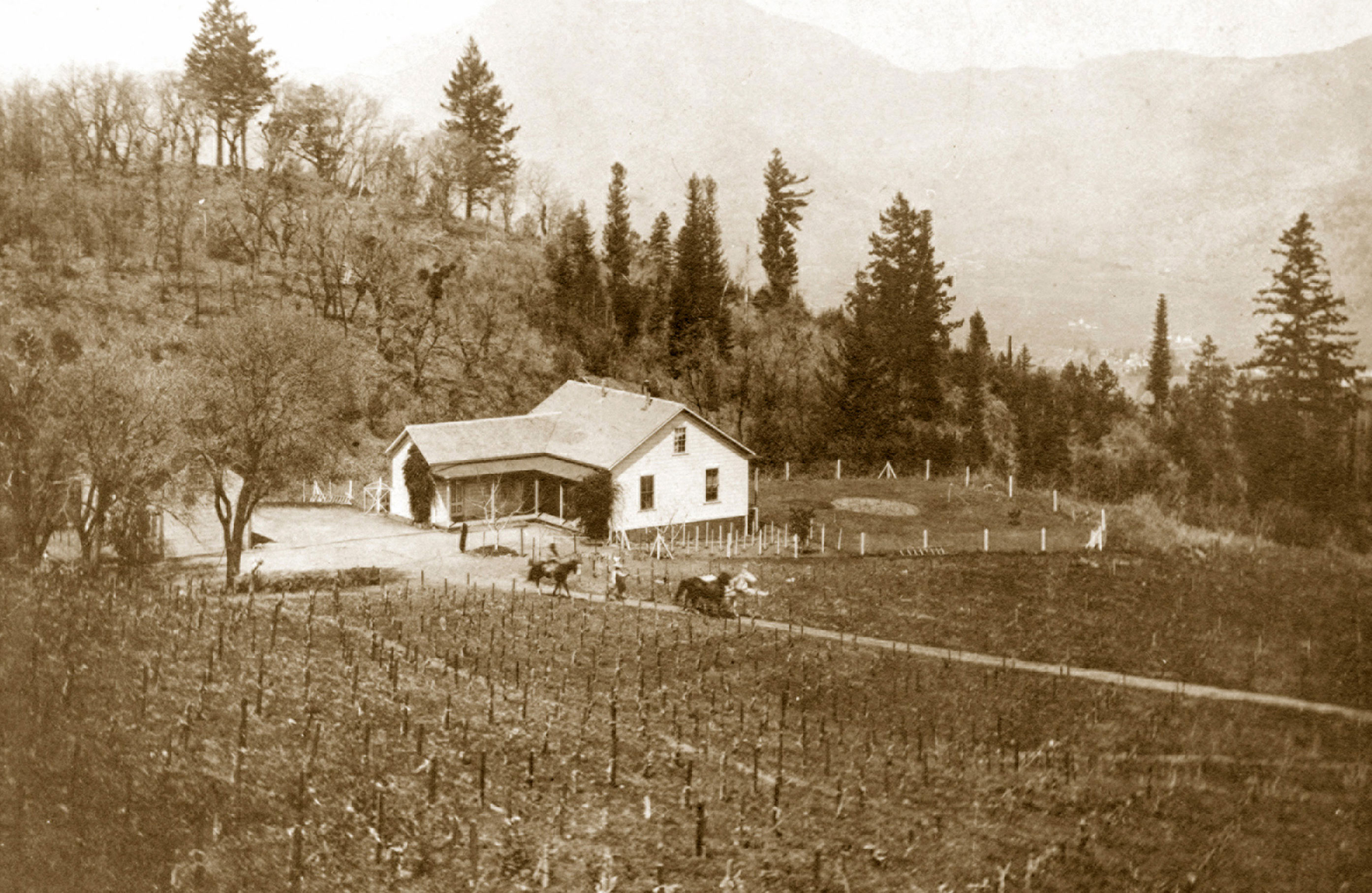 PHOTO: Monte Vista Vineyard